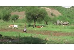 Orka i siew w Etiopii